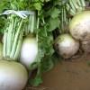 漬物用野菜