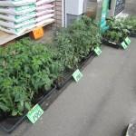 野菜の苗と花苗
