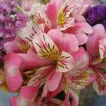 むかわ町の花