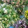 花卉農家を訪問