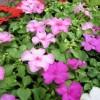 新しい花も3種類入荷