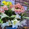 自宅用の花、ユリ