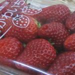 むかわ苺など
