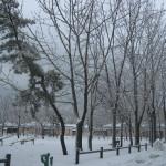 冬です、まだまだ。