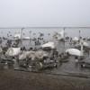 ウトナイ湖の白鳥さん