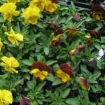 ガーデニング用の花