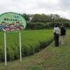 稲の生育視察会