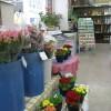 野菜と花の種
