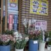切花いっぱい