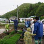 美苫の原料米の田植え体験