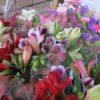 むかわ町の切り花